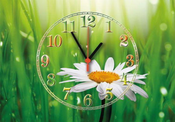 """Годинник настінний """"Ромашка в природі"""""""